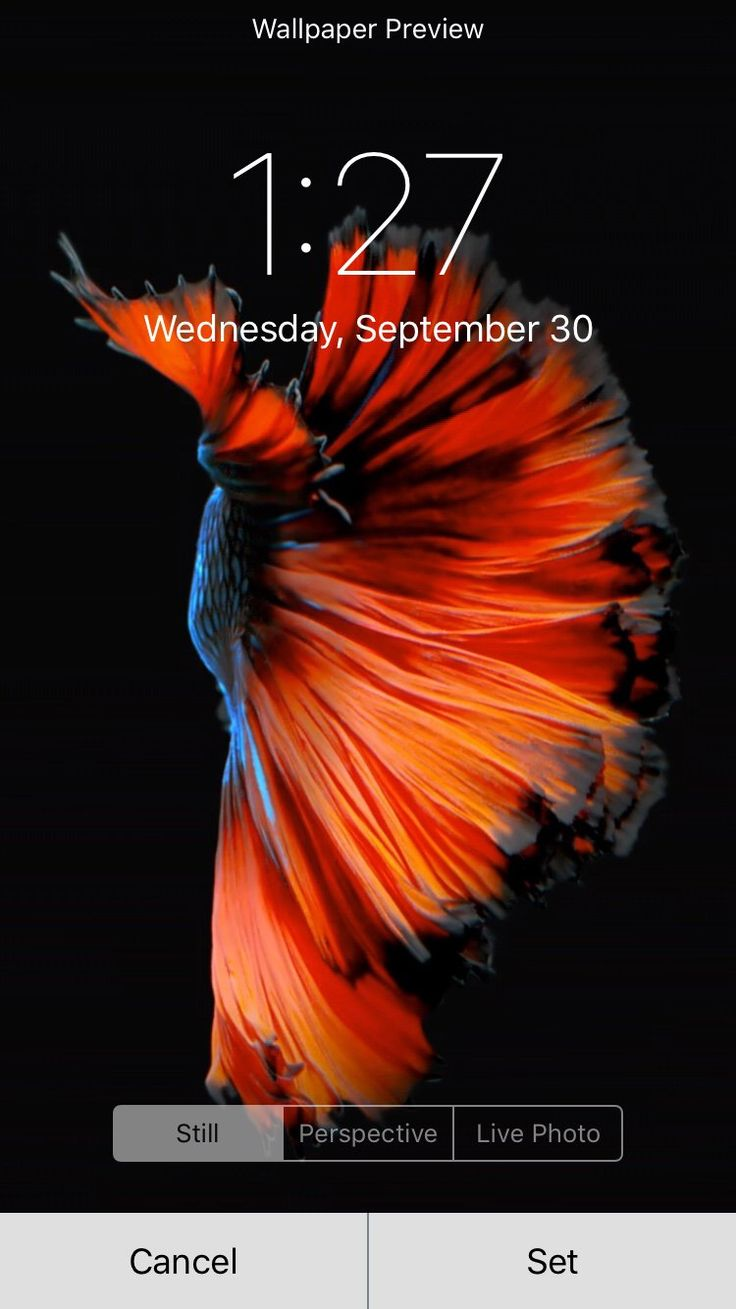 Aquarium Live Wallpaper - Android Apps on Google Play ...