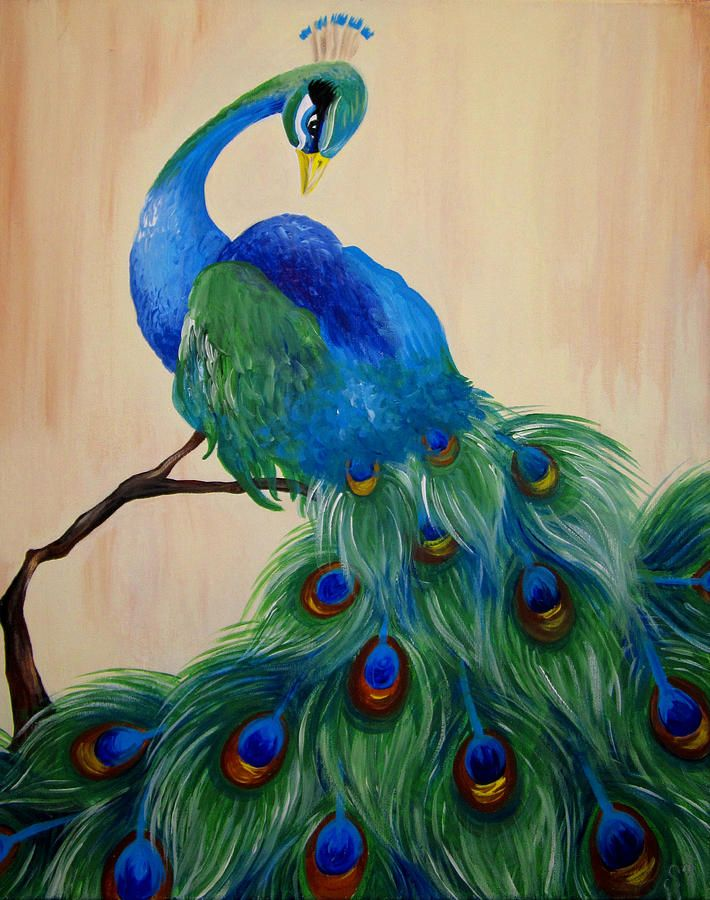 Peacock Print By Stacy Craig
