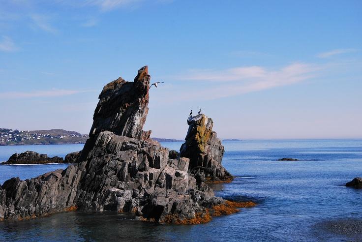 Cormorants enjoying the view at the Three Sisters