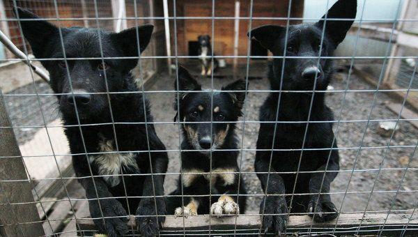 """Италия. Приюти животное и получили """"скидку"""" на налог - Итальянцы настоящие любители домашних животных. Но случаются и печальные ситуации, когда животные оказываются на улице. Так во многих итальянских городах существуют приюты для животных. На их содержание тр"""