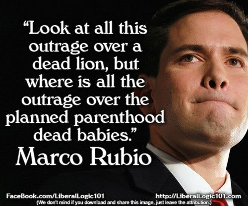 I'm sad about Cecil the lion too, but I am devastated over how many babies are murdered everyday for the sake of convenience. Just like the lion, one baby's death is too many