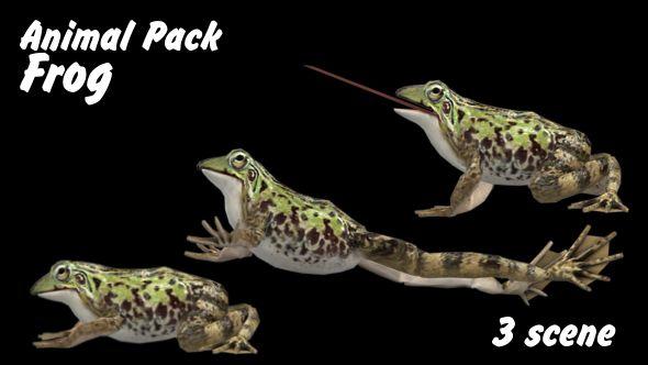 3d, animal, animals, farm, frog, nature, realistic, transparent, wild life