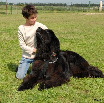 Here are some of the most kid- and family- friendly dog breeds that you should know. http://healthypets.mercola.com/sites/healthypets/archive/2013/06/14/kid-friendly-dog-breeds.aspx