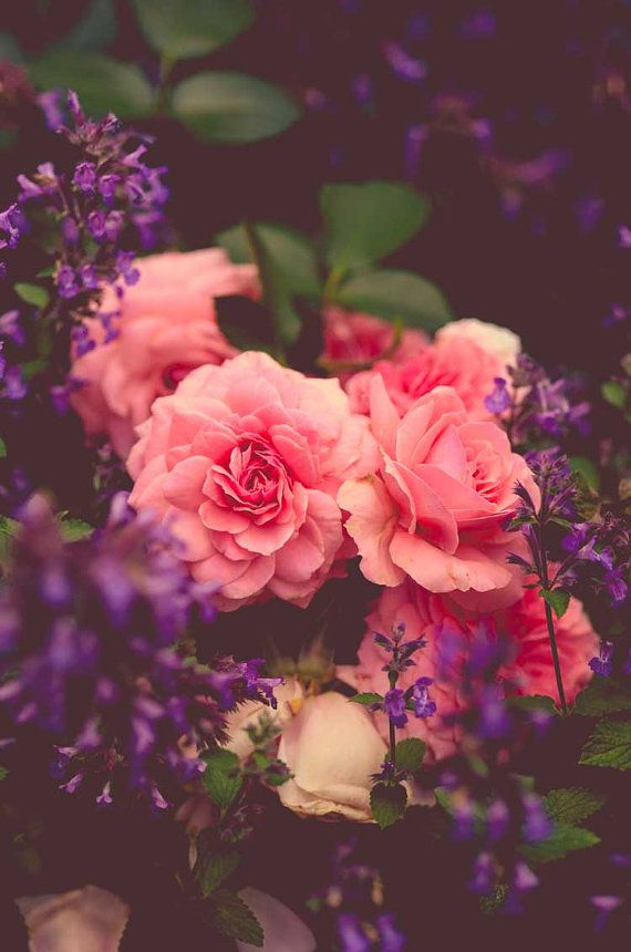 Rose garden photograph, vintage floral photograph, cottage decor, pink green purple black, dark art, summer, dreamy photography, wall art