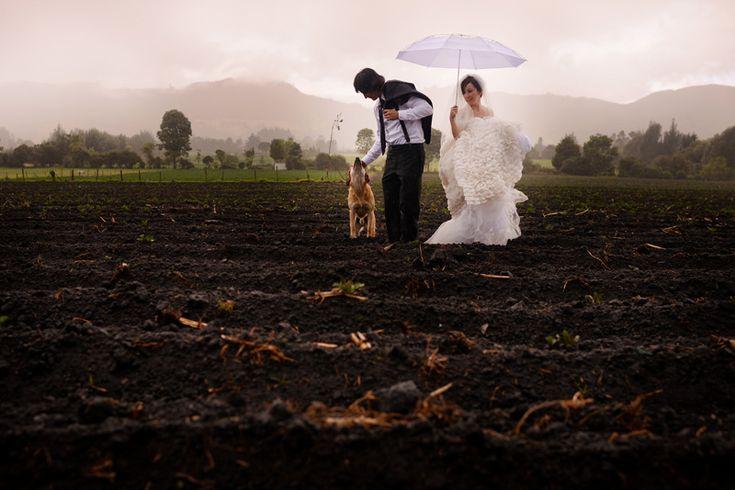 bodas, bodas, matrimonios, matrimonio