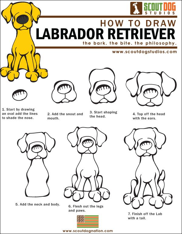 How to Draw Labs Download the How to Draw Labs.  I don't know but this looks a lot like Sammy!