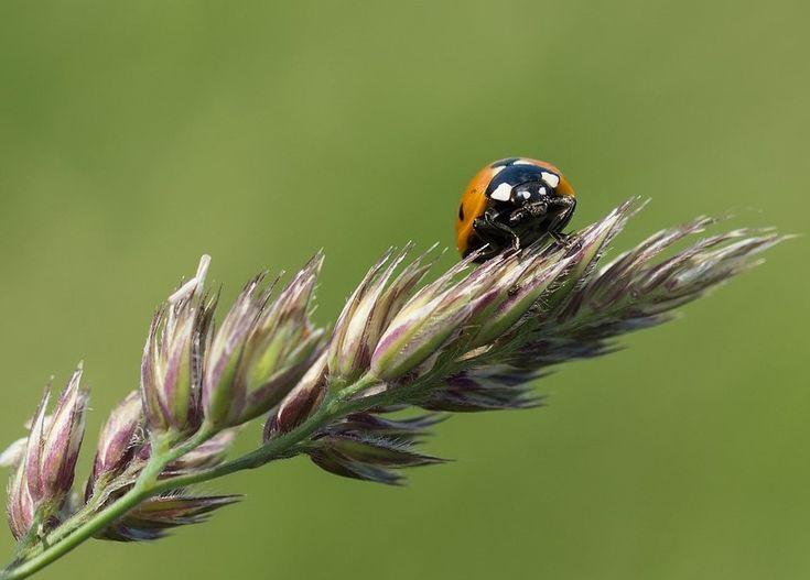 10 Tipps, was man gegen das Insektensterben tun kann