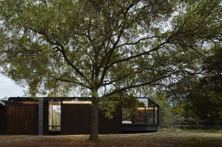 Rammed earth addition slots between existing trees linking occupants to nature   Architecture And Design
