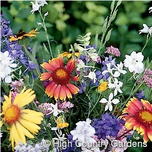 For homeowners who are looking to add color to their flowerbeds or meadows but are troubled by browsing deer in their yards, this wildflower blend will be your solution. Formulated with a mix of 19 species of native and adapted annuals and perennial wildflowers (including Larkspur, Lupine, Liatris, Columbine, Blanket Flower, Purple Coneflower, annual poppies and others) this long blooming mix is well suited for use in the western US but not the desert Southwest. Seed at 1 oz. per 125 sq. ft…