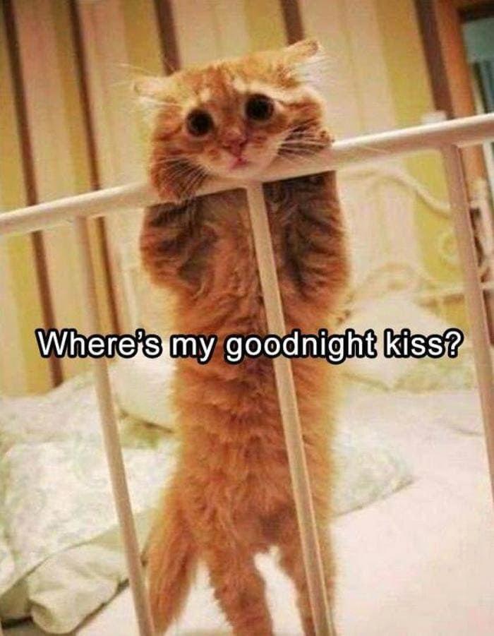 Lustige Tierbilder des Tages Release 3 (64 Fotos) -39 #funnyanimals #funny # …  – Cat Crazy