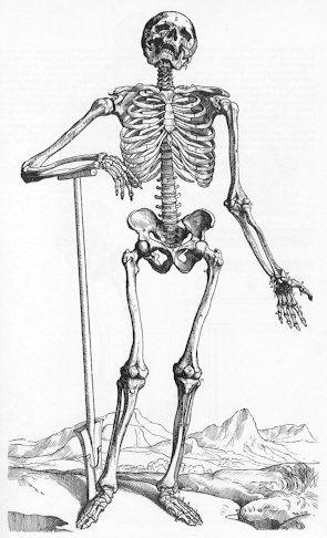 gray's anatomy skeleton - google search | tat- 2 | pinterest, Skeleton
