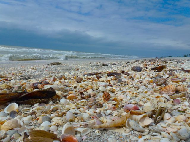 One of my favorite shelling beaches, Sanibel Island, Florida