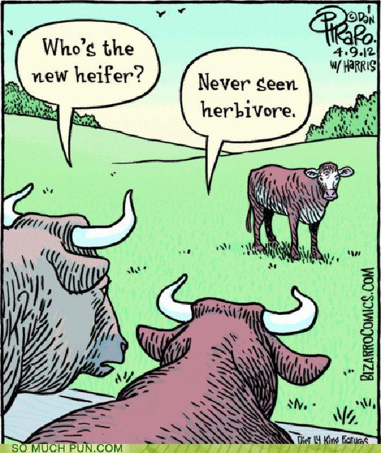 hilarious puns pictures | Love Puns « spydersden
