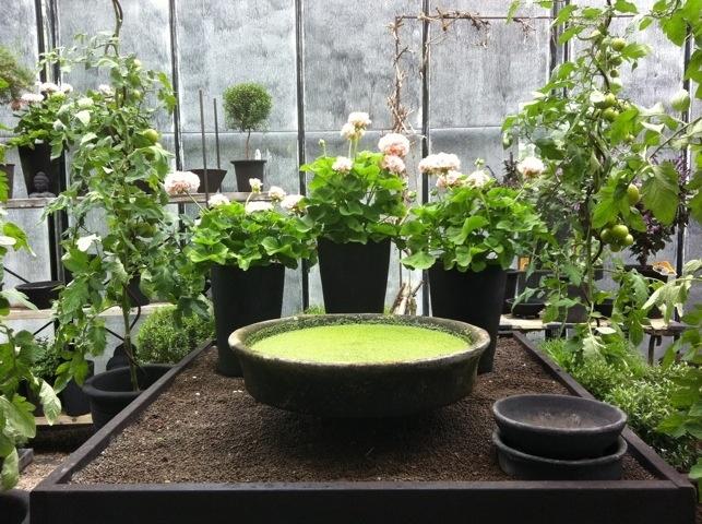 Löddeköpinge Plantskola