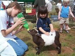 Let's feed the goats! Hire a mobile petting zoo for your kid's this year - barnyard animals for rent in Orange County CA at fun factory party rentals - Orange County CA and surrounding areas like Santa Ana, Anaheim, Newport Beach, Irving, LA and more!