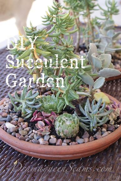 Succulent Garden – Drama Queen Seams