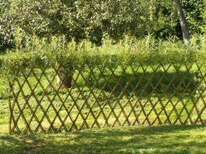 Belgisk hegn
