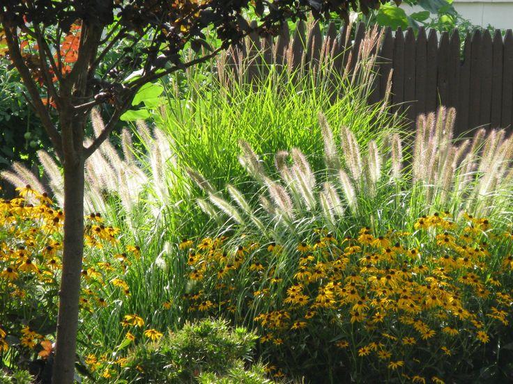 Pin by kathryn williams on yard garden pinterest for Ornamental grass garden design pictures
