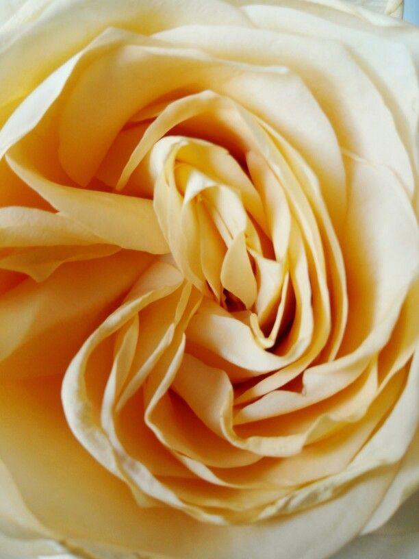 #rose - vellutate e delicatamente profumate... le adoro!!!
