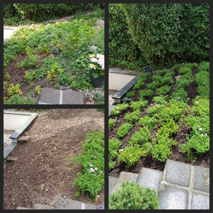 Ihr Garten verdient auch einen Styling Cut-) Gut und gerecht - vorgartengestaltung mit rindenmulch und kies