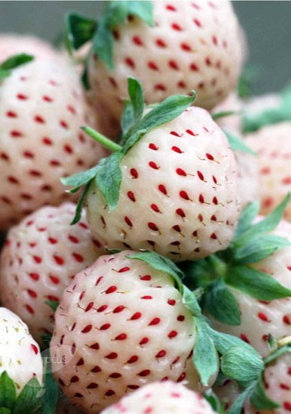 Pineberries - this is a cross bred fruit - looks like an albino strawberry and tastes like a pineapple