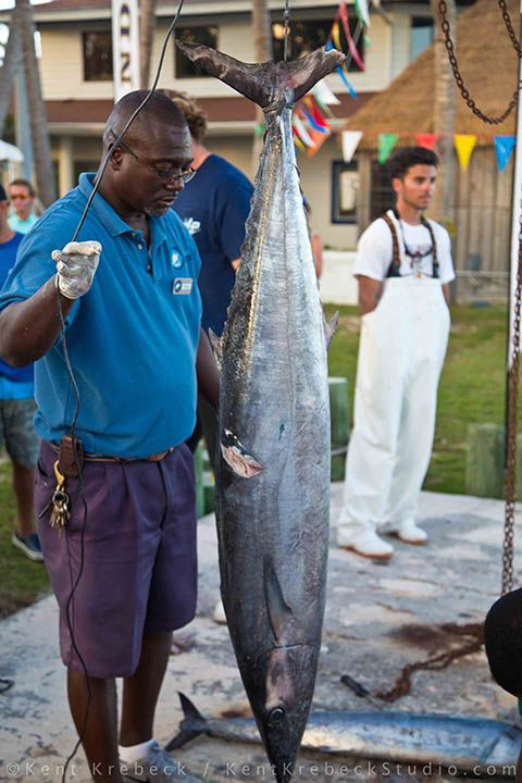 107 best images about caribbean fishing deep sea fishing for Bimini fishing charters