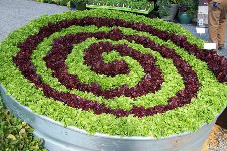 beautiful lettuce growing in the garden.  Why not make a pattern like this?