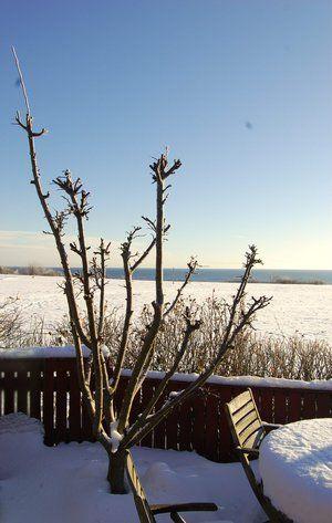 10 gode råd til haven i februar