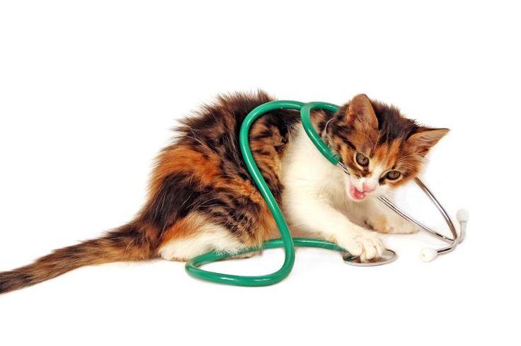 Feline Diabetes Symptoms: Breathing Problems. Some cats experience breathing problems with diabetes.