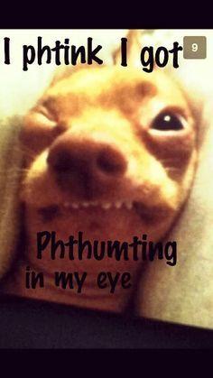 tuna dog paint me - Google Search