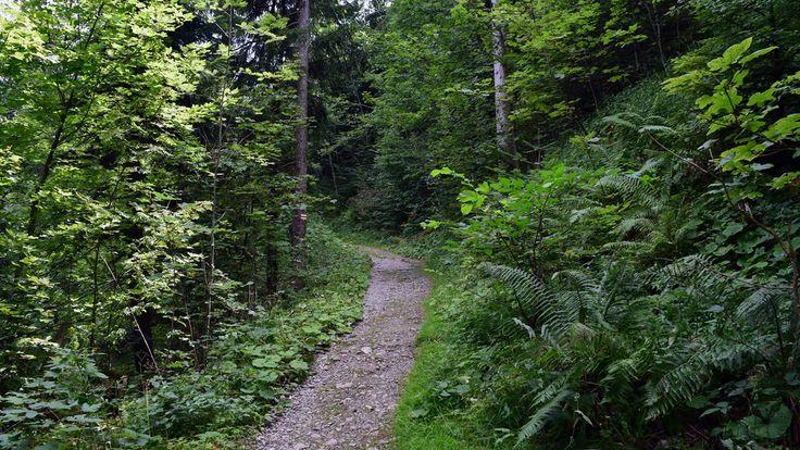 Dornbirn - Walk on mountain Karren