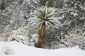 Image result for télálló egzotikus növények
