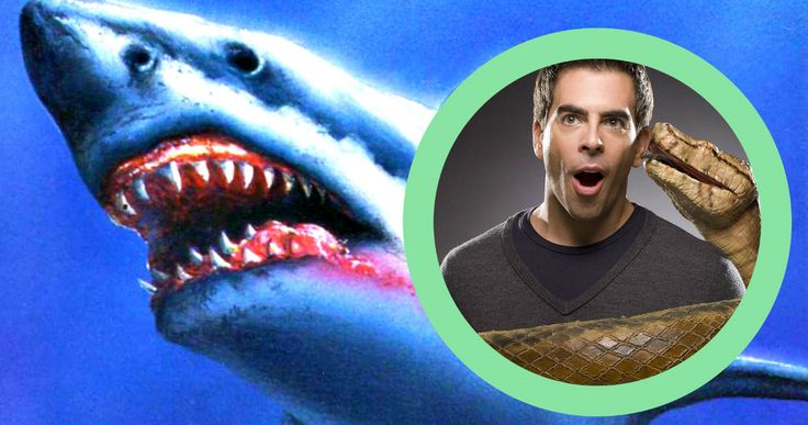 Eli Roth Directing Giant Shark Thriller 'Meg' -- Eli Roth is in talks to direct the languishing shark thriller 'Meg', which is moving forward after 20 years in development. -- http://movieweb.com/meg-movie-giant-shark-director-eli-roth/