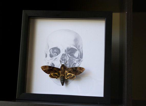 Vintage Death us Head Moth