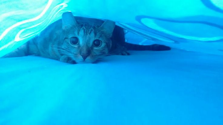 Pues me escondo
