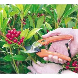 Gardening jobs to get done in February