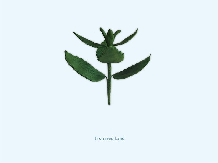 Promised Land - Brandnetel