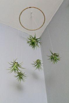 Plantas aéreas, 10 ideas para decorar tu casa                                                                                                                                                                                 Más