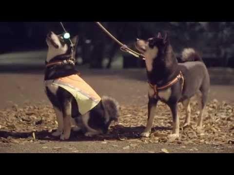 Kunnon heijastimet koiralle - YouTube