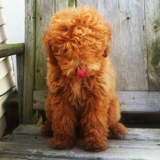 ginger!Animal Lovers, Dogs Stuff, Copper Copper, Copper Things, Copper Crushes, Things Animal, Copper Dogs, Copper 1, Awwww