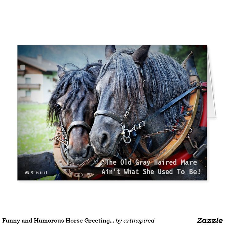 124 Best Horse Birthday Quotes Images On Pinterest