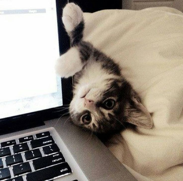 Kitty: wanna play with me?
