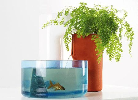 Small Aquarium, Glass Aquarium Tanks Design Trends