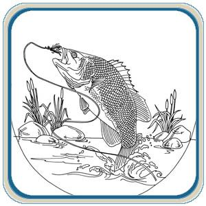 97 Best Fish Images On Pinterest