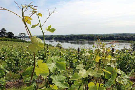 Chenin Blanc, the Loire Valley's most versatile grape - Yahoo Lifestyle UK