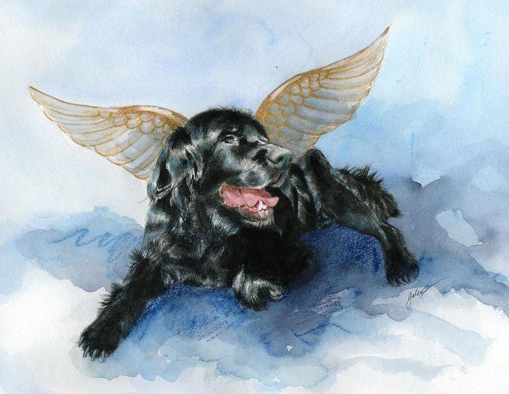 """""""Devo sacrificar meu cachorro?"""" – Essa é uma pergunta que infelizmente muitas pessoas acabam fazendo mais cedo ou mais tarde. Ver o sofrimento do animal é muito doloroso e muitos veterinários acabam aconselhando a eutanásia. Se você está pensando em sacrificar seu cão, não se culpe. Leia nosso artigo sobre como lidar com a morte …"""