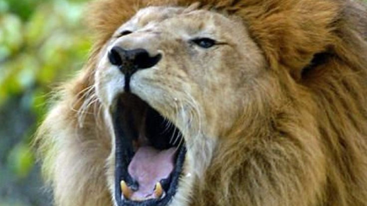 Bronx, Jul 30: Bronx Zoo Private Group Tour