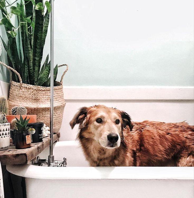 "1,310 Likes, 29 Comments - Brittany & Stella (@brittanyshmyr) on Instagram: ""Rub a dub dub, Stella isn't a fan of the tub ---but someone got super muddy at daycare!🐷"""