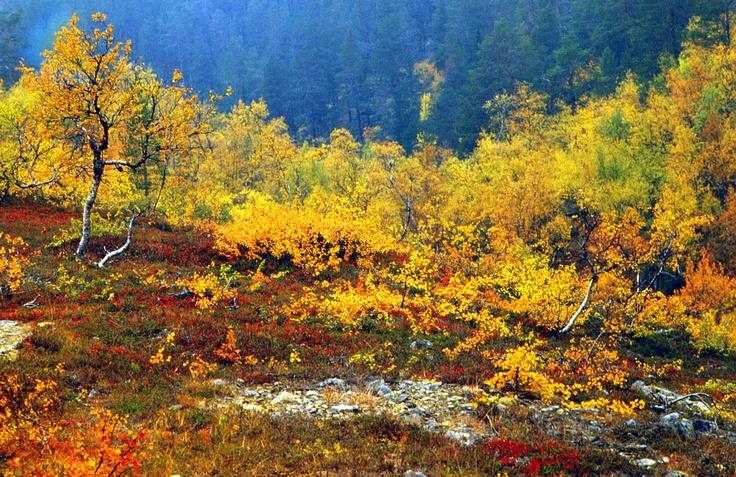 Lapland Lappi Finland