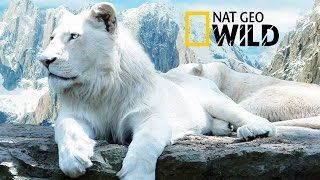 The Rare and Exotic Animals - National Geographic Documentary - Video